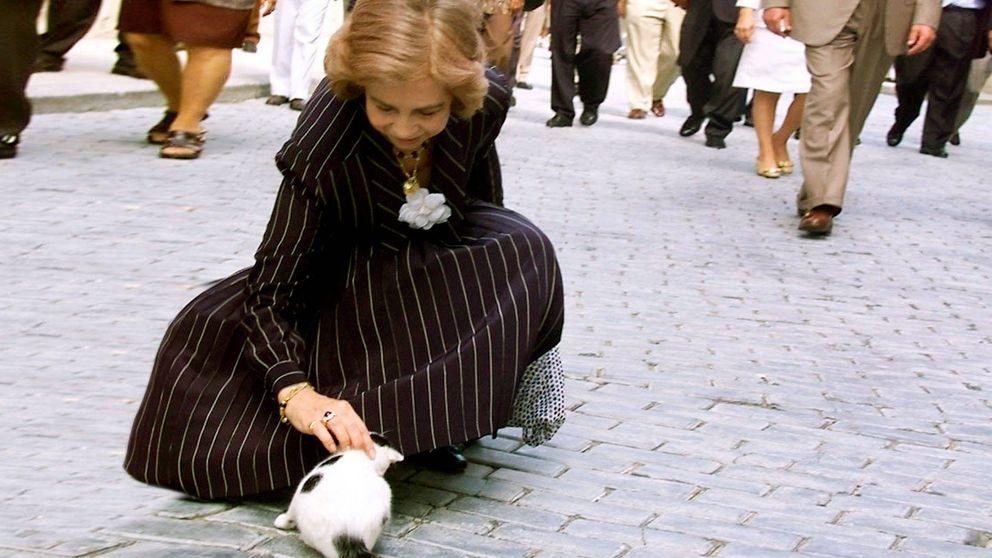 Del tierno momento con un gato al regalo de Fidel Castro: el viaje de la reina Sofía a Cuba