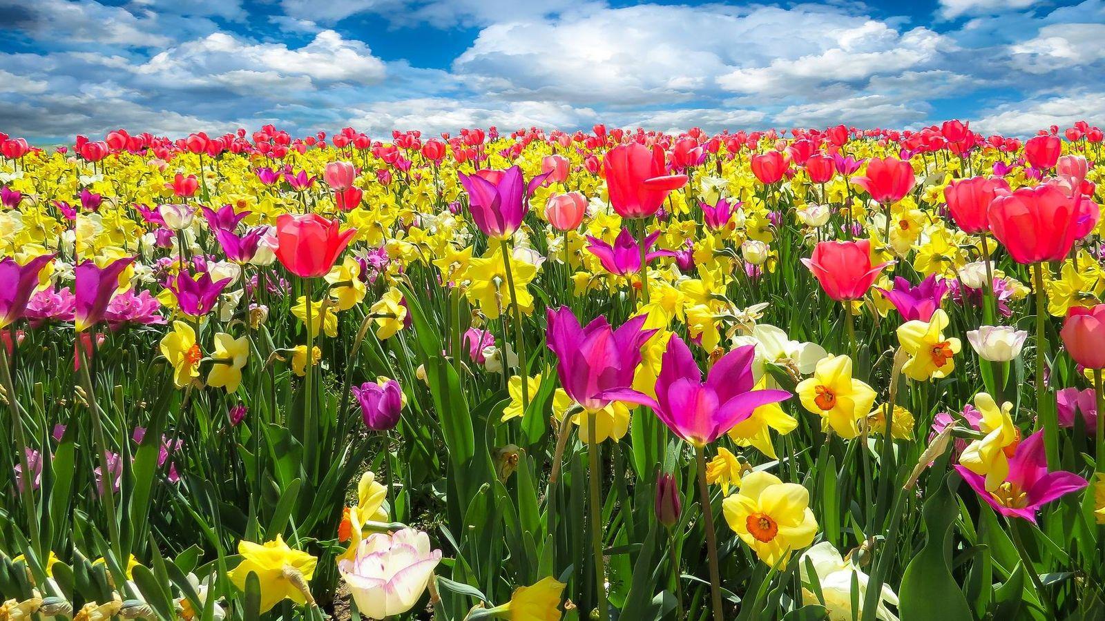 Foto: La primavera anuncia la llegada del buen tiempo.