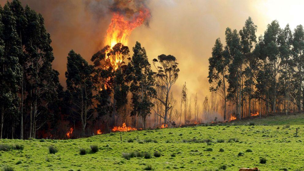 Vientos de 100 km/h complican la extinción de los incendios en Asturias y Cantabria