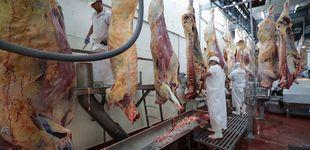 Post de Los pecados ocultos de la carne: cómo el sector se convirtió en un foco global del virus