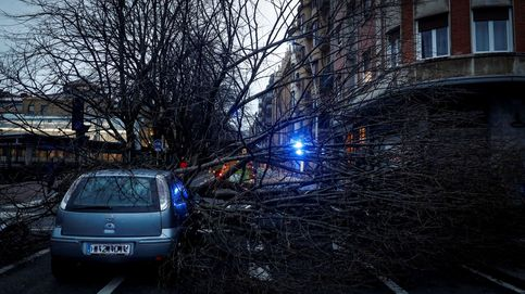 Un coche aplastado por un árbol que ha tirado el fuerte viento