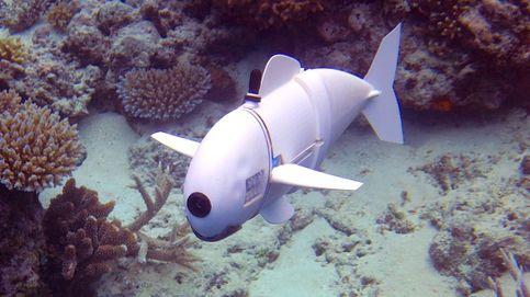 Este es el pez autónomo del MIT para vigilar el mar