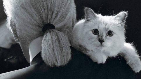 Homenajeamos a la mascota de Karl Lagerfeld en la semana de los gatos