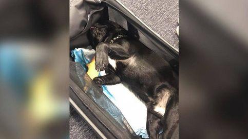 Muere un perro en un avión tras ser obligado a volar en el compartimento superior