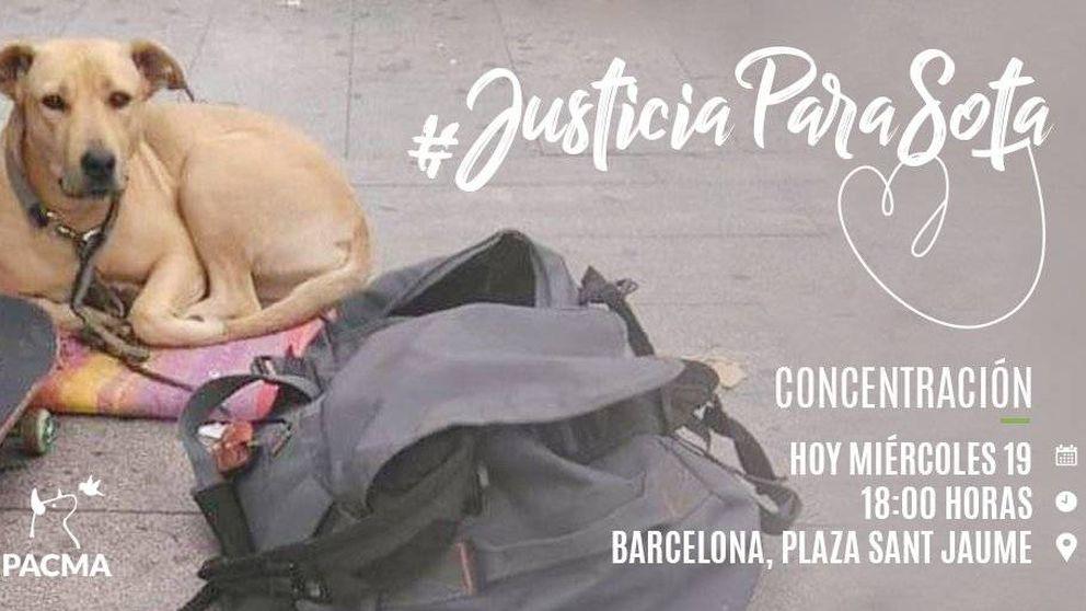 #JusticiaParaSota: indignación por la muerte a balazos de una perra en el centro de BCN