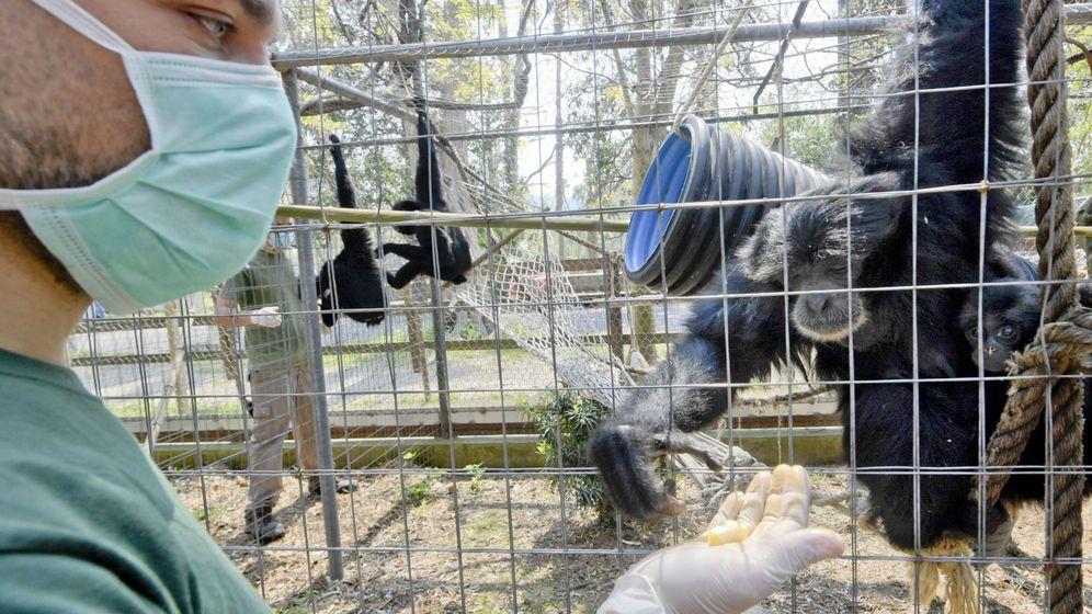 Foto: Un zoo italiano durante la pandemia.Foto: EFE EPA CIRO FUSCO