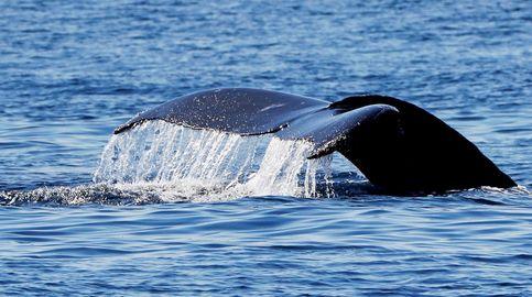 La ballena de cuatro patas, el fósil secreto de Perú de un animal que llegó a caminar