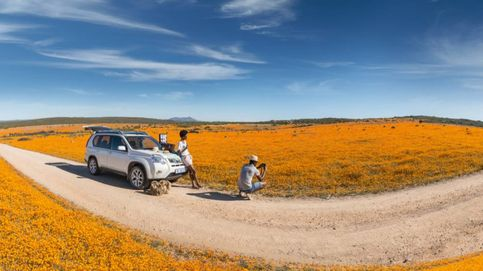 ¡En Sudáfrica es primavera! Por qué tienes que viajar ya al país de Charlize Theron