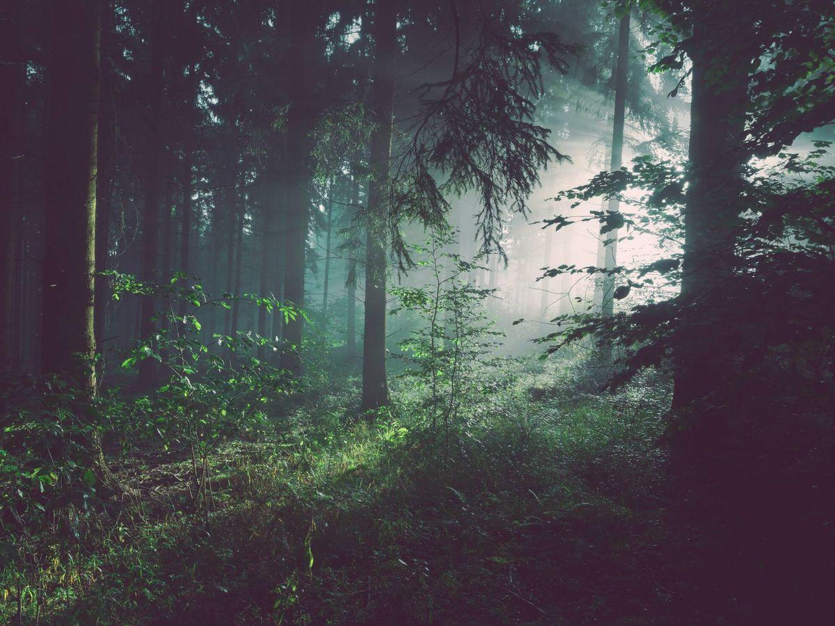 Foto: La poesía deja respirar a las palabras, la natura, a todo lo demás. (Unsplash/@sebastian_unrau)