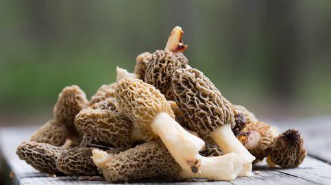 Setas y hongos gourmet que merece la pena incluir en tu dieta