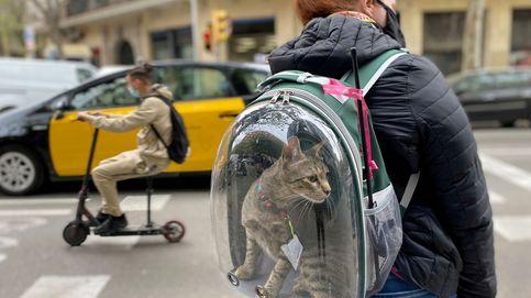 Una mujer lleva a su gato en una mochila en Barcelona