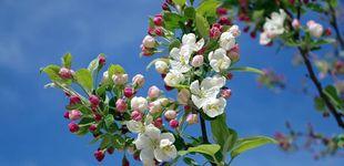 Post de El equinoccio de primavera tiene lugar el 20 de marzo: adiós al invierno