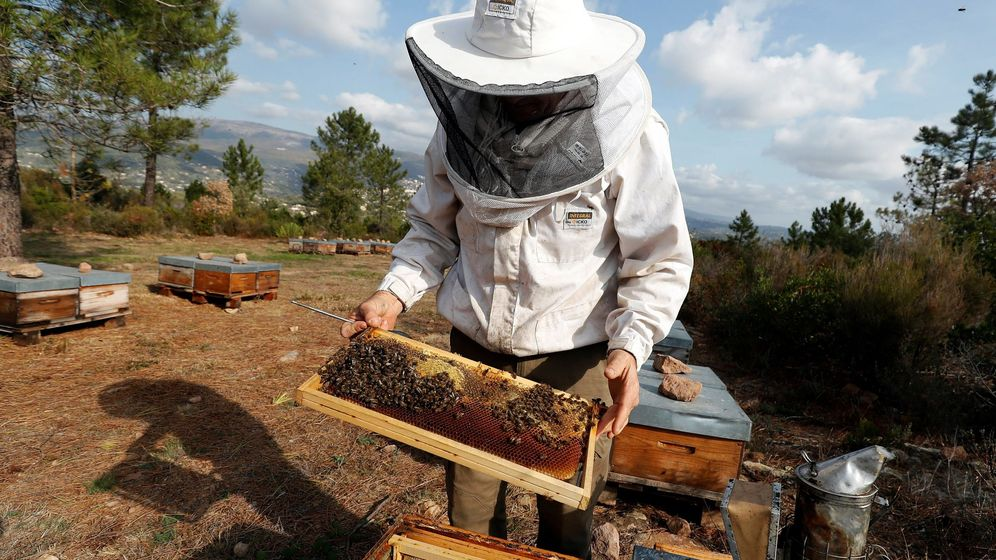 Foto: Cerca del 30% de las colonias de abejas desaparecen cada año en Francia debido al uso de pesticidas. En la imagen, un apicultor en Saint-Cézaire-sur-Siagne. (EFE)