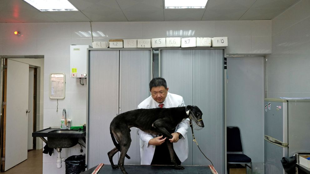 Los antivacunas llegan al mundo animal: millones de mascotas en peligro
