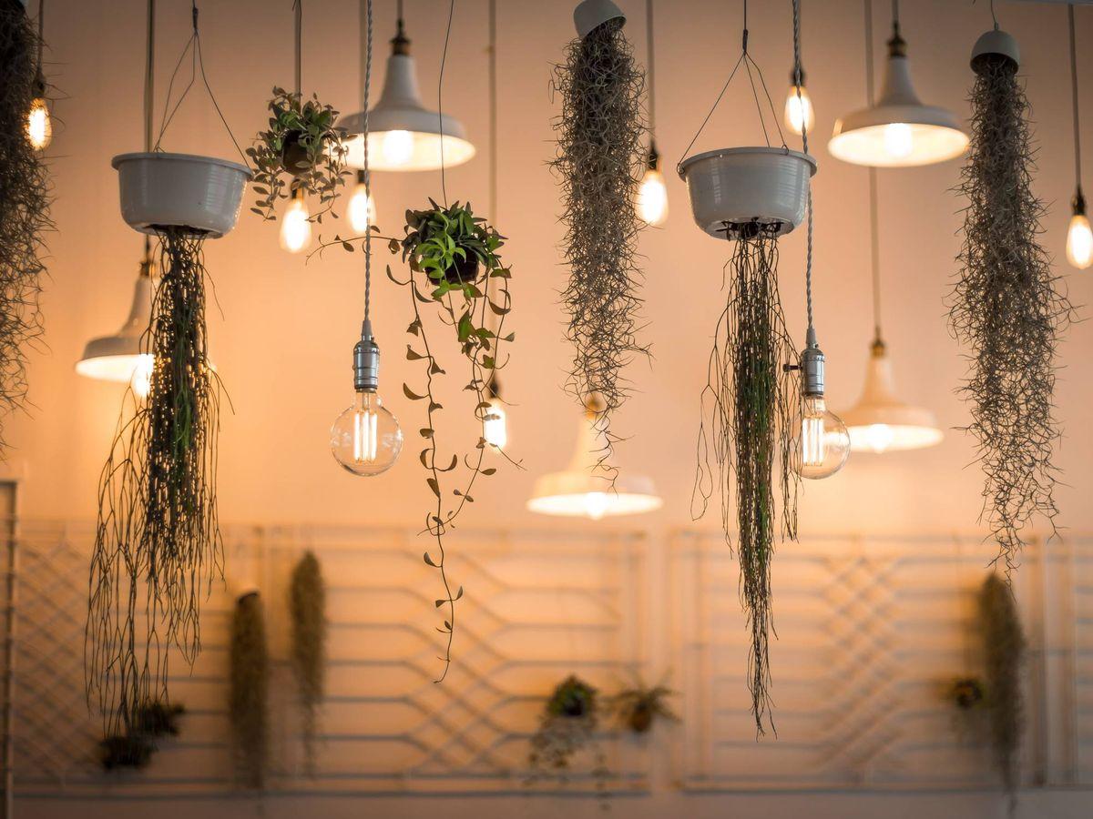 Foto: Renueva el look de tu hogar con estas lámparas. (Unsplash)