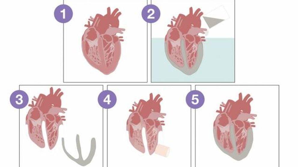 Crean un corazón biónico para probar válvulas artificiales