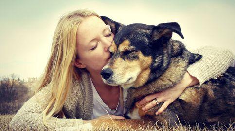 Los perros, como las personas, también sufren la crisis de la mediana edad
