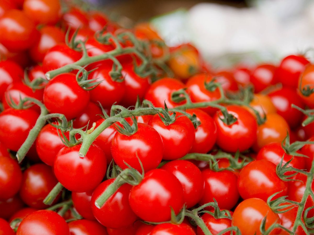 Foto: Los tomates cherry han cogido mucha fama. (iStock)