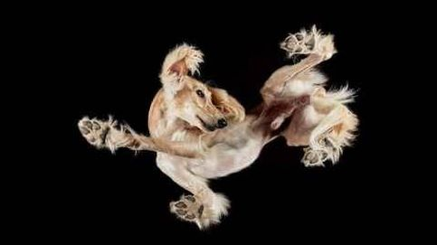 ¿Perros contorsionistas? No, están fotografiados desde abajo