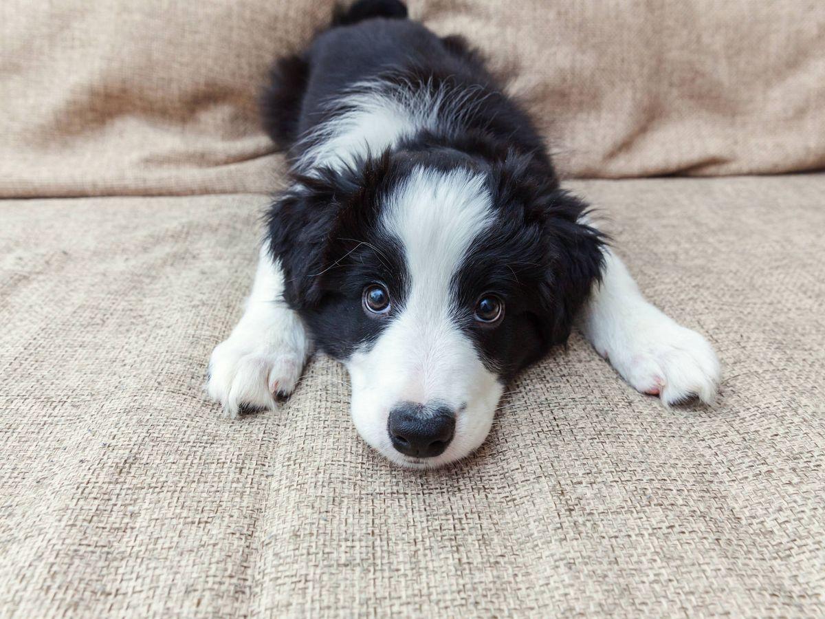 Foto: Los perros son más inteligentes de lo que pensábamos (iStock)