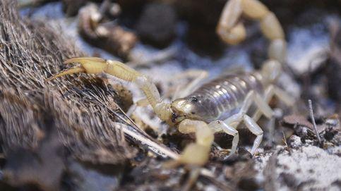 Encuentran los restos de un escorpión de mar del tamaño de un perro