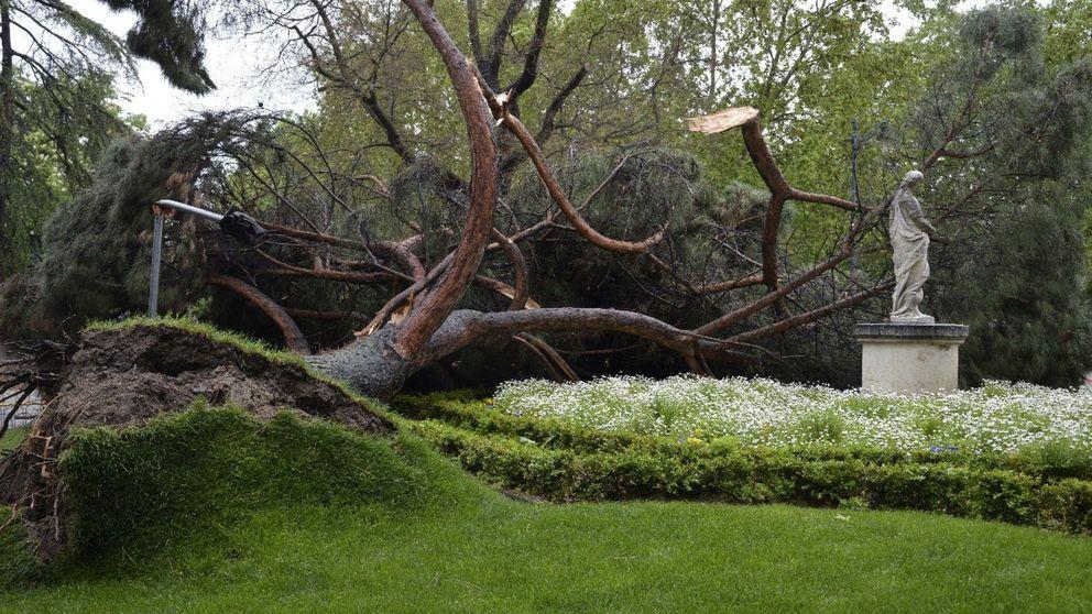 El Ayuntamiento de Madrid cierra El Retiro por las fuertes rachas de viento
