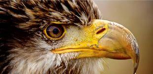 Post de Naturaleza salvaje a un 'click': cómo hacer las mejores fotos