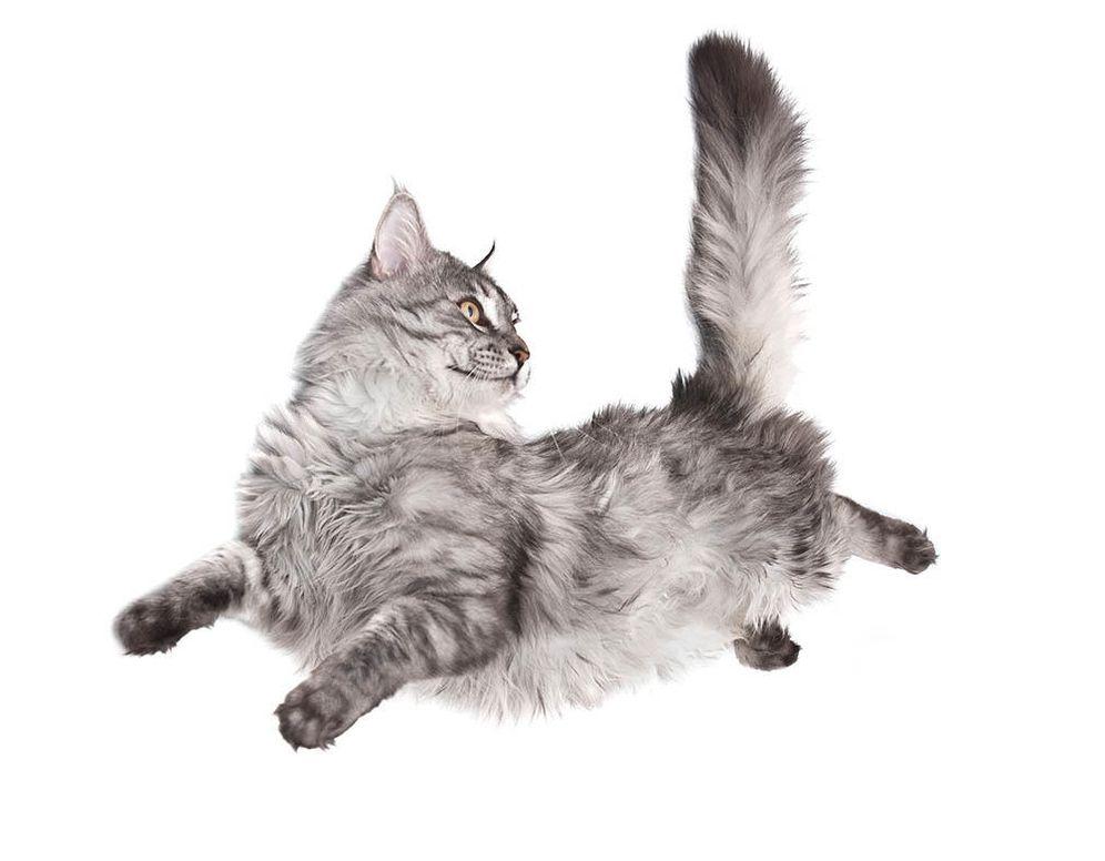 Foto: Cómo hacen los gatos para caer de pie sin violar las leyes de la física