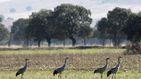 Cambian secano por regadío en plena sequía y expulsan aves en peligro de sus santuarios