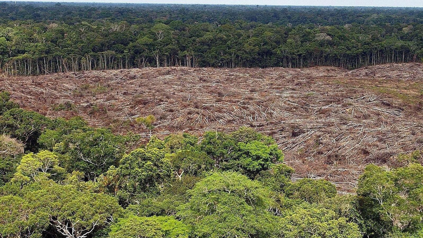 Foto: La Amazonía. (EFE)