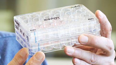 Organoides: adiós a las enfermedades raras y a los experimentos con animales